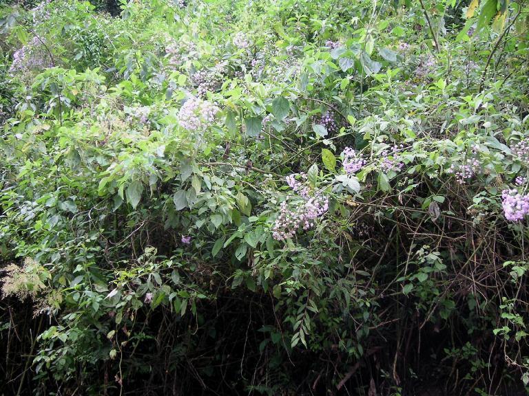 buskar med blommor